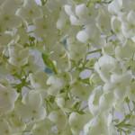 geschnittene Hortensien mit Homöopathie behandelt