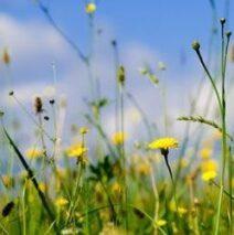 Frühjahrszeit = Heuschnupfenzeit